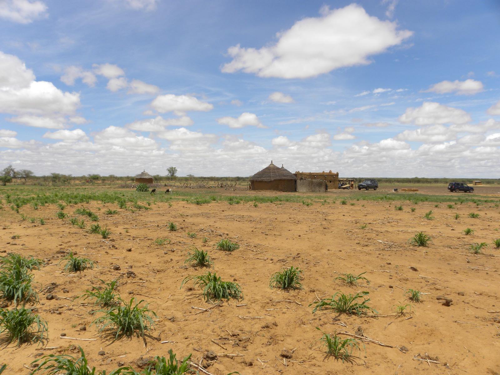 bekæmp-ørkendannelse